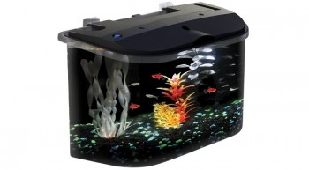 aquarius aq15005 5 gallon aquarium